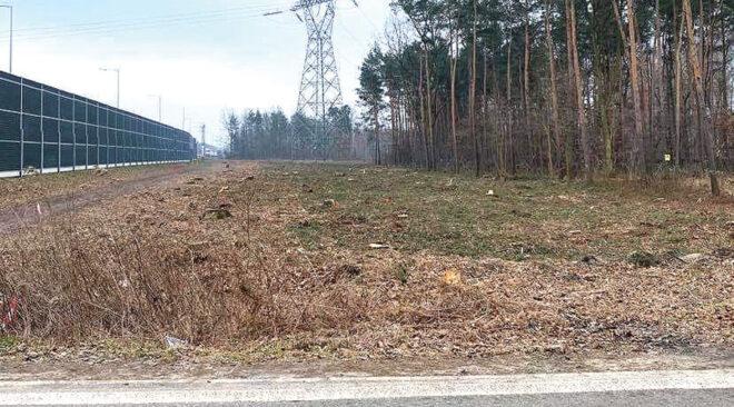 Coraz mniej drzew