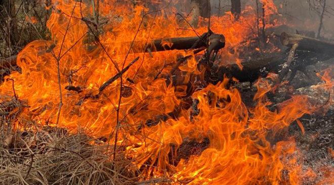 Pożar rezerwatu przyrody Horowe Bagno