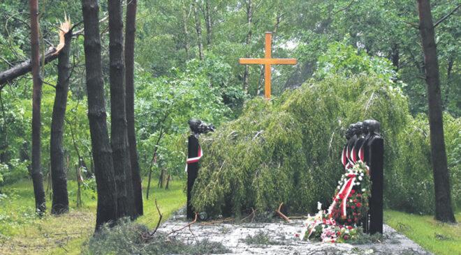 Brzoza zniszczyła pomnik